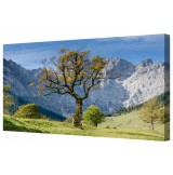 "The Lonely Tree Framed Canvas Wall Art Picture 18"" x 32"""