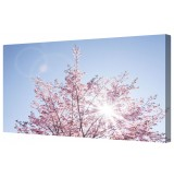 "Sunlit Cherry Blossom Framed Canvas Wall Art Picture 14"" x 24"""