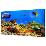 Colourful Underwater Coral Reef Tropical Fish Giclee Framed Canvas Print