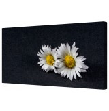 Just A Daisy Couple No Chain Framed Canvas Wall Art Picture