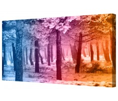 Ambient Rainbow Forest Framed Canvas Wall Art Picture