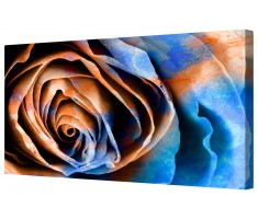 Abstract Rose Macro Framed Canvas Wall Art Picture