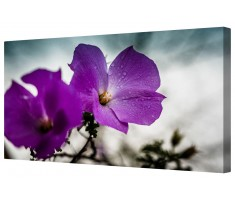 Purple Rain Flowers Framed Canvas Wall Art Picture