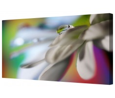 Colourful Raindrop On Petal Framed Canvas Wall Art Picture