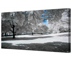 Snow Covered Winter Trees Framed Canvas Wall Art Picture