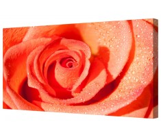Red Rose Flower Petals Framed Canvas Wall Art Picture