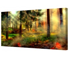 Fairytale Forest Framed Canvas Wall Art Picture