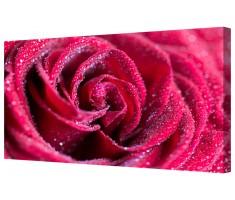 Velvet Red Rose Framed Canvas Wall Art Picture