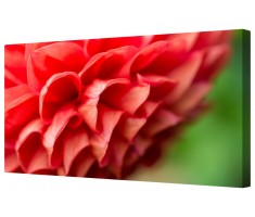 Red/Green Floral Pattern Framed Canvas Wall Art Picture