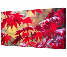 Crisp Red Leaves Framed Canvas Wall Art Picture