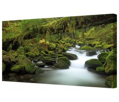 Rocky Forest Stream Framed Canvas Wall Art Picture