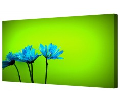 Blue Daisy Flower Petals Framed Canvas Wall Art Picture