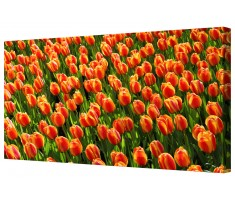 Red Tulip Flower Field Framed Canvas Wall Art Picture