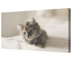 Cute Kitten Framed Canvas Wall Art Picture