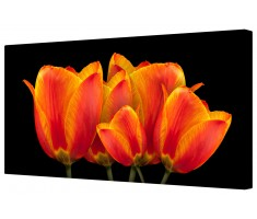 Vivid Tulip Flowers Framed Canvas Wall Art Picture