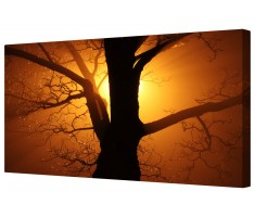 Sun Rays Through Tree Canvas Wall Art Picture