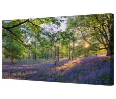 Bluebell Forest Canvas Wall Art Picture