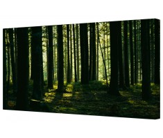Forest Landscape During Sunset Framed Canvas Wall Art Picture