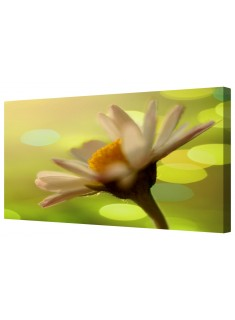 Abstract Daisy Flower Macro Framed Canvas Wall Art Picture