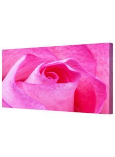 Pink Rose Flower Petals Framed Canvas Wall Art Picture