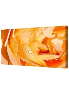 Orange Rose Flower Petals Framed Canvas Wall Art Picture