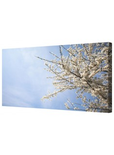 Apple Tree In Blossom under Blue Sky Framed Canvas Wall Art Picture