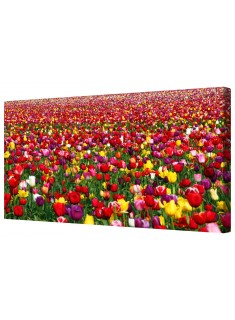 Vibrant Tulip Field Framed Canvas Wall Art Picture