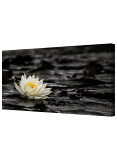 White Water Lily Framed Canvas Wall Art Picture