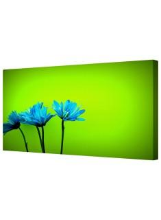 Blue Daisy Flower Petals Framed Canvas Wall Art Picture