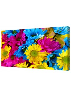 Colourful Daisy Flower Petals Framed Canvas Wall Art Picture