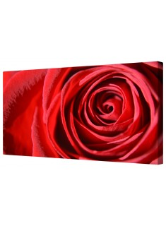 Crimson Red Rose Flower Petals Framed Canvas Wall Art Picture