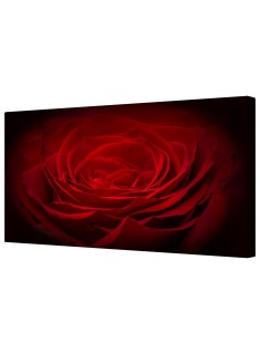 Single Red Rose Petals Framed Canvas Wall Art Picture