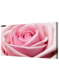 Single Pink Rose Framed Canvas Wall Art Picture