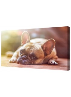 French Bulldog Framed Canvas Wall Art Picture