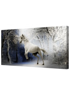Prancing Snow White Horse Framed Canvas Wall Art Picture