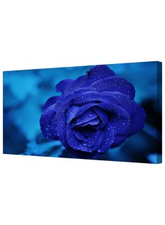 Royal Blue Rose Petal Flower Framed Canvas Wall Art Picture