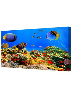 Colourful Underwater Coral Reef Tropical Fish Framed Canvas Wall Art Picture