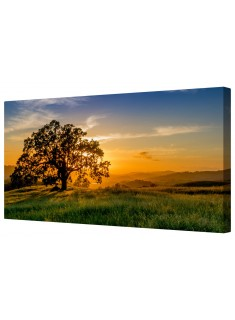 Single Lonely Tree At Dawn Framed Canvas Wall Art Picture