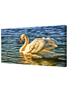 One Swan A Swimming Framed Canvas Wall Art Picture