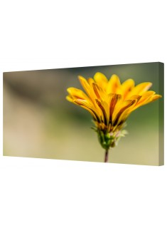 Yellow Wildflower Framed Canvas Wall Art Picture