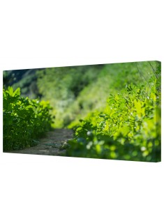 Nature Trail Framed Canvas Wall Art Picture