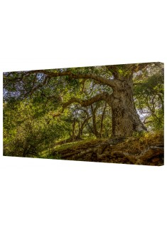 Sunlit Woods Framed Canvas Wall Art Picture