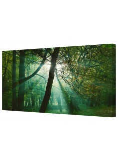 Sun Rays In The Forest Framed Canvas Wall Art Picture